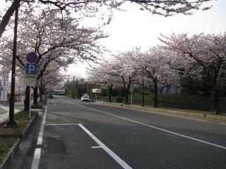 桜1−1.jpg