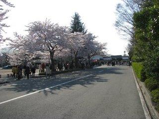 夜桜25-1.jpg