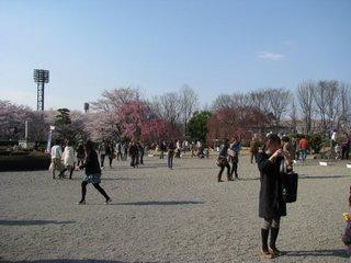 夜桜25-4.jpg
