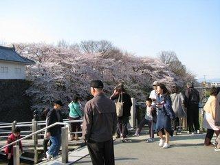 夜桜25-5.jpg